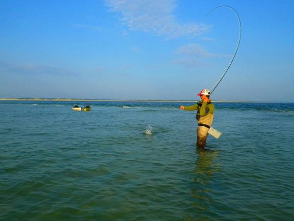 Capecodfishingexpeditions for Cape cod fishing