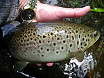 Farmington_browns_5-26-13_002.jpg
