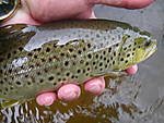 Farmington_browns_6-16-13_002.jpg